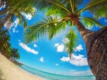 Paradise beach on tropical islands. Saona Island, Dominican Rep. Palm against bluew sky. Paradise beach on tropical islands. Saona Island, Dominican Republic stock photography