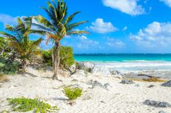 Paradise beach of Tulum, Quintana Roo, Mexico. Mayan ruins of Tulum at tropical coast stock images