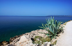 A paradise beach water seen from above, green vegetation. stock images