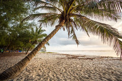 Paradise beach with white sand and palms. Kenya Royalty Free Stock Image