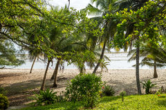 Paradise beach with white sand and palms. Kenya Stock Photos