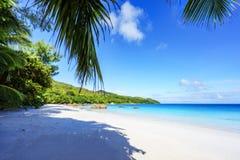 Paradise beach.White sand,turquoise water,palm trees at tropical. Amazing beautiful paradise beach.White sand,turquoise water,palm trees at tropical beach anse Royalty Free Stock Photo