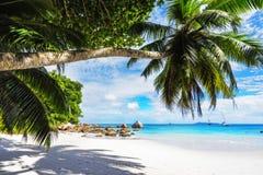 Paradise beach.White sand,turquoise water,palm trees at tropical. Amazing beautiful paradise beach.White sand,turquoise water,palm trees at tropical beach anse Stock Photos