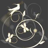 Paradise bird Royalty Free Stock Image