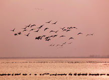 Paradise of birds Royalty Free Stock Images