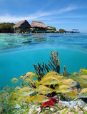 Paradise in Bocas del Toro. Surface and underwater view, Bocas del Toro, Panama stock images