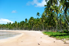 Paradise Brazilian Beach Royalty Free Stock Photo