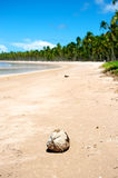 Paradise Brazilian Beach Royalty Free Stock Photography