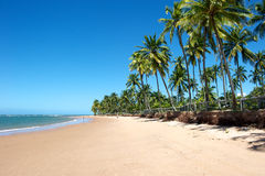 Paradise Brazilian Beach Stock Photo
