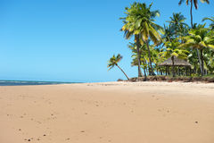 Paradise Brazilian Beach Royalty Free Stock Images