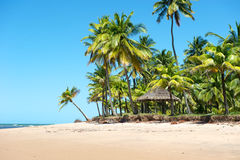 Paradise Brazilian Beach Royalty Free Stock Image