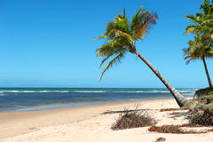 Paradise Brazilian Beach Stock Images