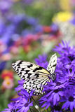 Paradise of Butterfly Royalty Free Stock Photos