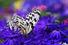 Paradise of Butterfly. Beautiful butterfly image with flower background Stock Images
