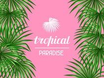 Paradise card with palms leaves. Decorative image tropical leaf of palm tree Livistona Rotundifolia. Image for holiday Stock Images