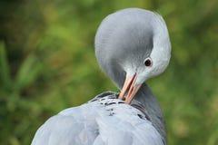 Paradise crane Stock Images