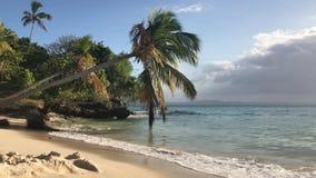 Paradise-Eiland met een palm op de oceaan in Dominicaanse Republiek stock video