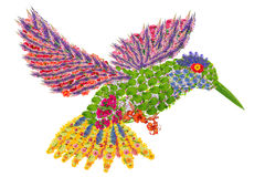 Paradise floral humming-bird. Paradise humming-bird made from fresh summer flowers. Abstract isolated collage Stock Photography