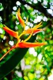 Paradise flower Royalty Free Stock Photo