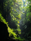 Paradise forest in a Cave in Vanuatu Stock Images