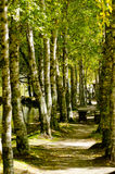 Paradise forest path Stock Image