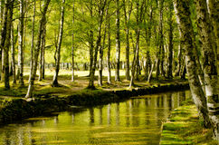 Paradise forest river Royalty Free Stock Image