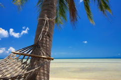 Paradise and hammock Stock Images
