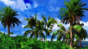 Paradise on Hawaii Island Stock Photos