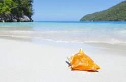 Paradise island beach. With seashell stock photo