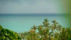 Paradise island exotic beach, tropical plants before rain swaing in the wind. Bright juicy green coconut palm trees against a tuquoise blue sea background stock footage