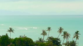 Paradise island exotic beach, tropical plants before rain swaing in the wind. Bright juicy green coconut palm trees against a tuquoise blue sea background stock video footage