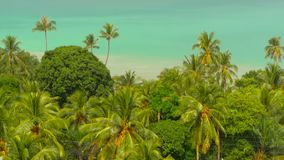 Paradise island exotic beach, tropical plants before rain swaing in the wind. Bright juicy green coconut palm trees against a tuquoise blue sea background stock video