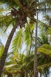Paradise Islands in Guna Yala, Kuna Yala, San Blas, Panama. Sunset. Sunrise. Paradise islands in Guna Yala. Kuna Yala. Archipielago e San Blas, in Panama stock photo