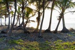Paradise Islands in Guna Yala, Kuna Yala, San Blas, Panama. Sunset. Sunrise. Paradise islands in Guna Yala, Kuna Yala, San Blas, Panama. Sunrise. Sunset. Palms royalty free stock images