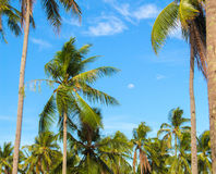 Paradise landscape with coco palm trees. Exotic place view through palm tree silhouettes. Royalty Free Stock Photos