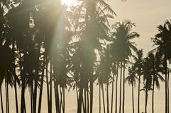 Palm-trees Sunset Paradise. This shot was taken on the beautiful island of Bali/ Indonesia up north in Medewi. A famous surfing beach and more chilled and quiet Royalty Free Stock Photography