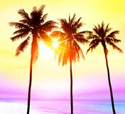 Paradise mit Palmen bei Sonnenuntergang stockbilder