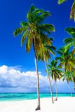 Paradise tropical beach palm the Caribbean Sea Stock Photos