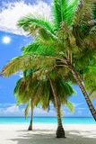 Paradise tropical beach palm the Caribbean Sea Stock Photo