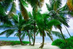Paradise tropical beach palm the Caribbean Sea Royalty Free Stock Photo