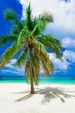 Paradise tropical beach palm the Caribbean Sea Royalty Free Stock Photos