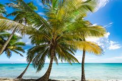 Paradise tropical beach palm Royalty Free Stock Photo