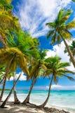 Paradise tropical beach palm Stock Image