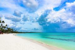 Paradise tropical beach palm Stock Photos