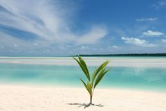 Paradise now. One of the most beautiful locations in the world! Crystal clear water and white coral sand as far as you can look around! Shot taken at Dez 24th Royalty Free Stock Images
