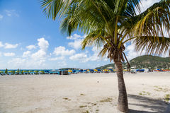 Paradise and Palm Tree. On St Maarten Stock Images