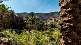 Paradise Palm Tree Timelapse 4k. 3-Axis timelapse of a valley in Morocco. Shot in 4k stock video