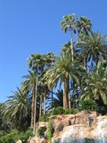 Paradise Palm Trees & Waterfall. A waterfall flowing below palm trees against a bright blue sky Stock Images