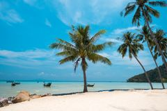 Palm and tropical beach Phi phi island Thailand. Paradise palm and tropical beach Phi phi island Thailand Royalty Free Stock Images