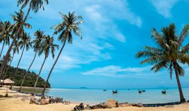 Palm and tropical beach Phi phi island Thailand. Paradise palm and tropical beach Phi phi island Thailand Stock Photography